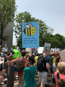 People's Climate March 2017 - If the bees die, they are taking us with them.